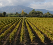 Viu Manent and their single vineyard wines