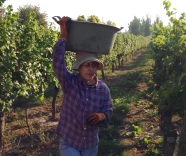 Colchagua Valley Vintage 2016